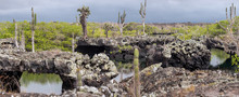 Lava Tunnels In Isabela Island, Galapagos. Focus On The Centre Of The Picture