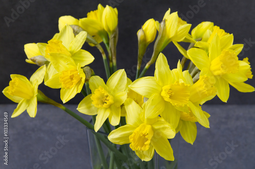 Yellow Daffodils Easter Flowers In Glass Vase Grey Background