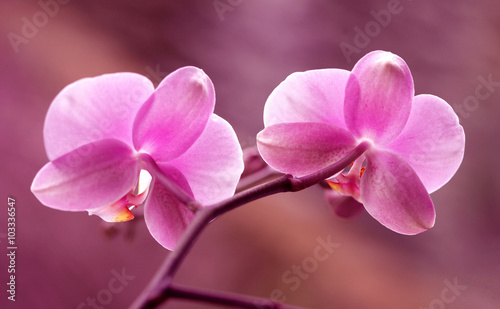 Fototapeta Storczyki - Orchidea obraz