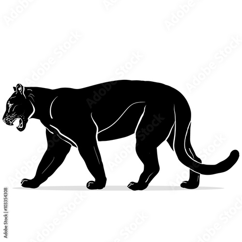 Photo  panther with huge tusks