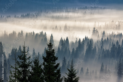 Fototapeten Wald coniferous forest in foggy mountains