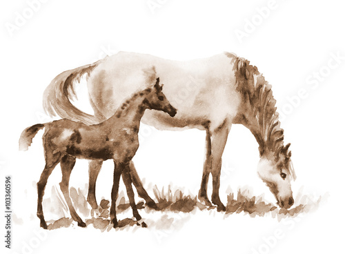 Juliste  Sepia watercolor mare and foal on white