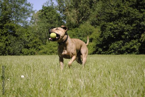 Poster Dog Spelende blije hond met bal
