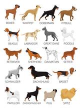 Dogs Breed Set. Vector Flat Illustrations