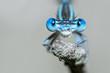 canvas print picture - Libelle Dragonfly - Gemeine / Blaue Federlibelle - Platycnemis pennipes