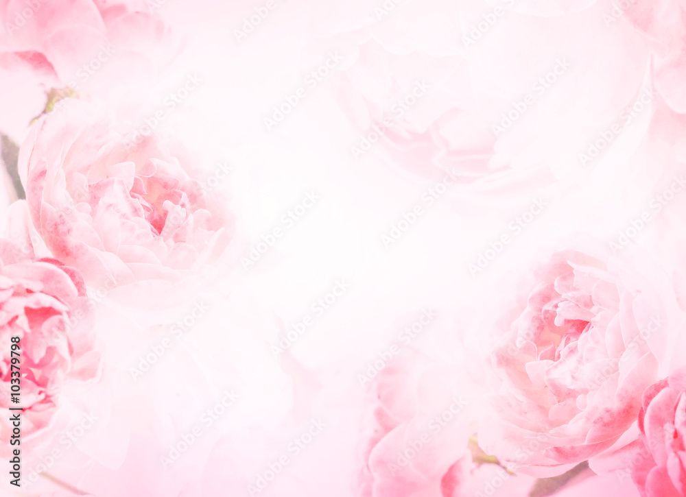 Fototapety, obrazy: the sweet pink rose flowers for love romance background