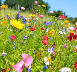 Obraz na PlexiGrußkarte - Blumenwiese - Sommerblumen