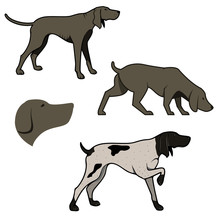 Set Of Hunting Dogs Illustrations