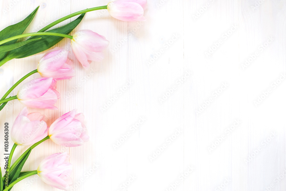 Tender pink tulips on white wooden background. Top view. Spring greeting card.