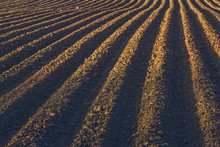 Furrows Rows In A Plowed Field Prepared For Planting Potatoes Crops In Spring.