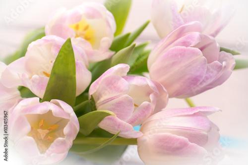 wiazka-pastelowych-rozowych-tulipanow-zamkniety-up