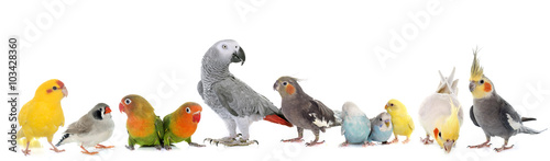 Tuinposter Papegaai group of birds