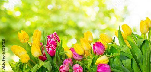 Foto op Plexiglas Tulp natur backgrounds