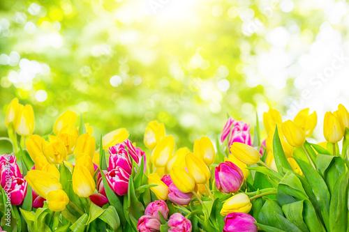 Foto op Plexiglas Tulp tulip bokeh backgrounds