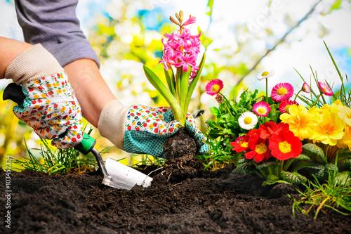 Cadres-photo bureau Jardin Frühling, Garten, Gartenarbeit, Gartenwerkzeug, Blumen