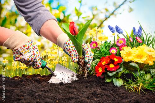 Staande foto Tuin Frühling, Garten, Gartenarbeit, Gartenwerkzeug, Blumen