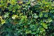 Leinwandbild Motiv 壁面緑化