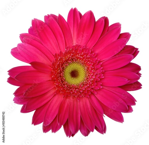 Fotobehang Gerbera Pink gerbera isolated on white background