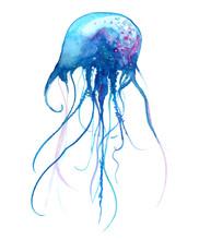 Jellyfish Watercolor Illustrat...