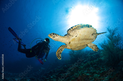 Keuken foto achterwand Duiken DIVER VS TURTLE / One of the highlights of diving at the indina ocean is sporting sea turtles.
