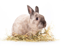 Funny Little Rabbit.