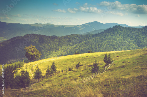 fototapeta na lodówkę Beautiful mountain landscape. View of the meadow and cows grazing on it.