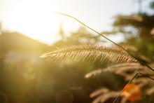 Wild Field Of Grass On Sunset, Soft Sun Rays, Warm Toning, Lens