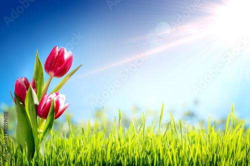 Staande foto Lente Spring tulips