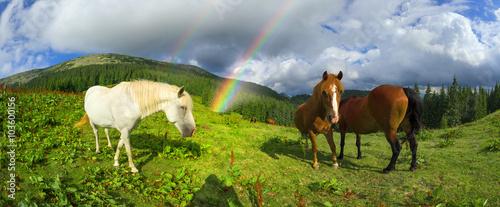 Photo  Carpathian mustangs in Gorgany