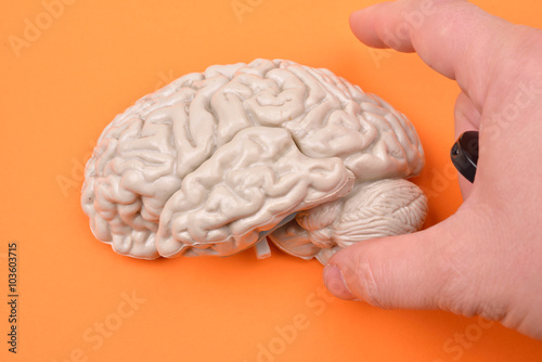 preparation of taking pictures of a 3D human brain model