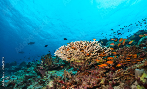 Foto op Plexiglas Onder water Coral reef with soft and hard corals