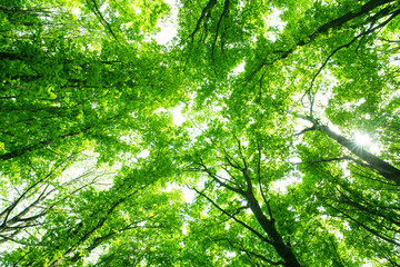 Fototapetabeautiful green forest