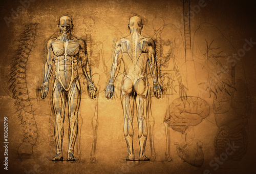 Fotografia human anatomy drawing, old, canvas