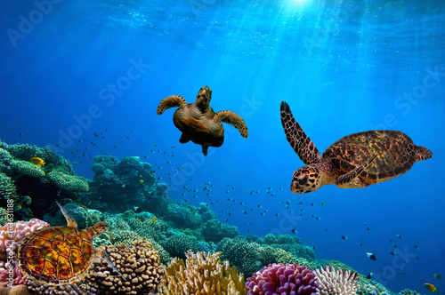 Turtle underwater Canvas-taulu