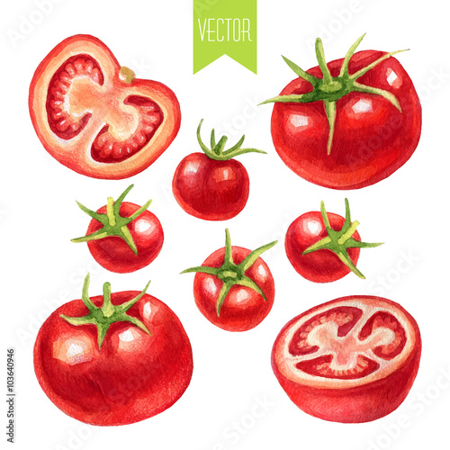 Watercolor set of tomatoes