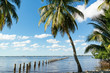 Edison Pier in Caloosahatchee River and palm trees in Fort Myers, Florida, USA