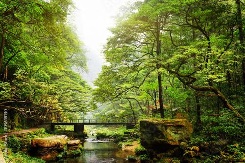 Scenic view of bridge over river among beautiful green woods