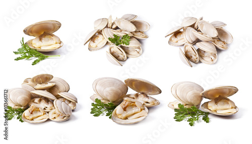 Fényképezés clams set isolated on white background