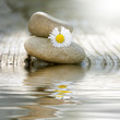 stones in balance with daisy and reflection in water