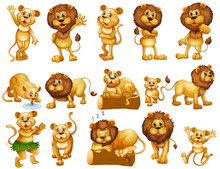 Lion And Lioness In Different Actions