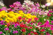Flowers In The Garden./ Landsc...