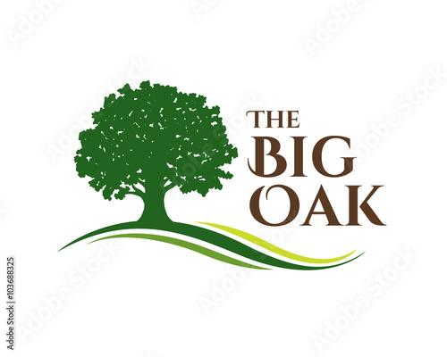 the big oak Canvas Print
