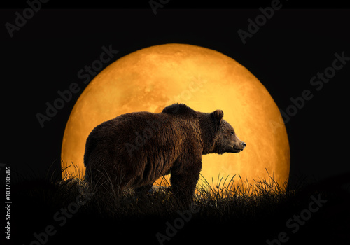 Stampa su Tela  Bear on the background of red moon