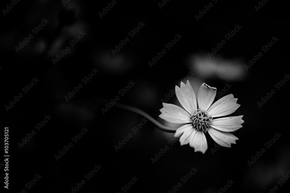 Photo Art Print Abstract Black And White Flowers Background