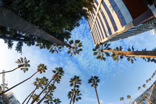 Poster  Beautiful view of palms and sky in Hollywood boulevard, Los Ange