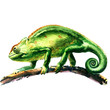 green chameleon, chamaeleo calyptratus, on a tree, isolated, watercolor illustration
