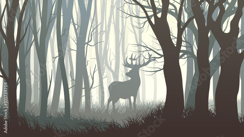 Photo  Horizontal illustration of wild elk in wood.