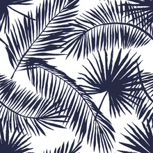 Palm Leaves Silhouette On The ...