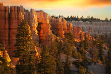 Morning Light At Bryce Canyon National Park, Utah, USA