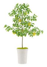 Potted Lemon Tree Isolated On ...